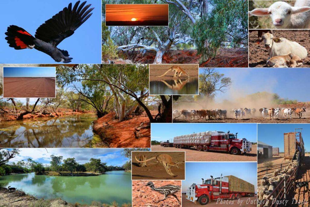 Outback Beds Loyalty Program